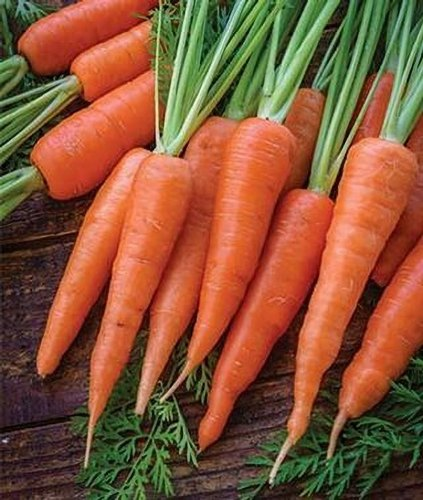 Red/Black/Orange Carrots (Daucus carota)