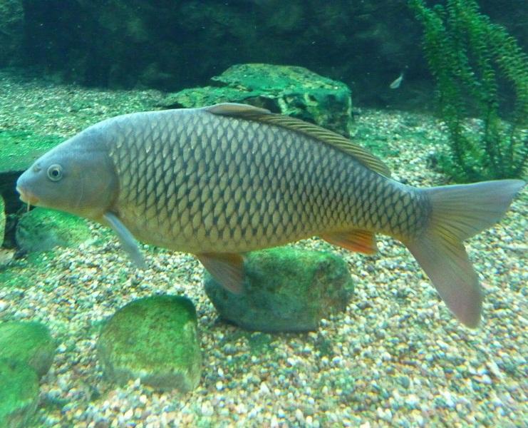 fish top