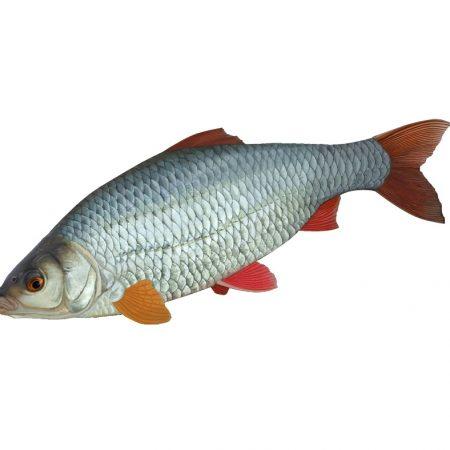 Fishbook-Roach-900x600-1