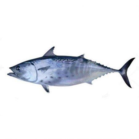 Tuny Tunna Fish