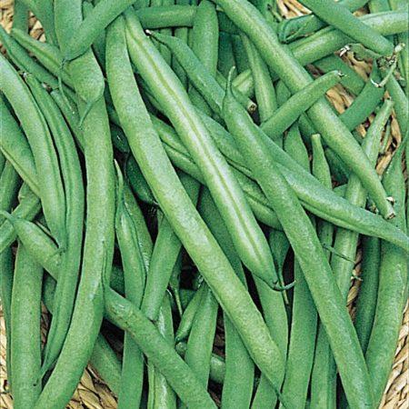 gurney-s-vegetable-seeds-14155-4f_1000