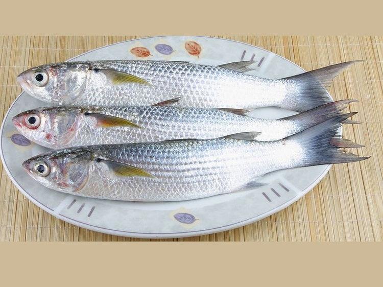 mullet-fish-51531025-b4f7-4aeb-a63c-afbdff61cd0-resize-750