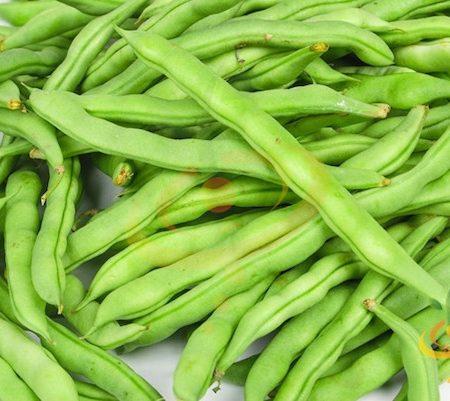 pole-bean-kentucky-wonder1-Seedsnow-Shut-l